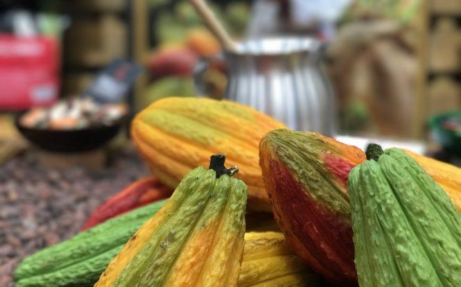 Kakaové boby celé
